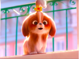 Daisy (Secret Life of Pets)