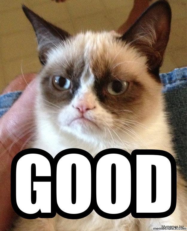 Afbeeldingsresultaat voor good angry cat meme