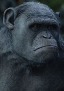 Rocket (Planet of the Apes)