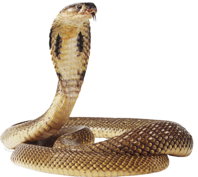 Cobra-snake-transparent-image