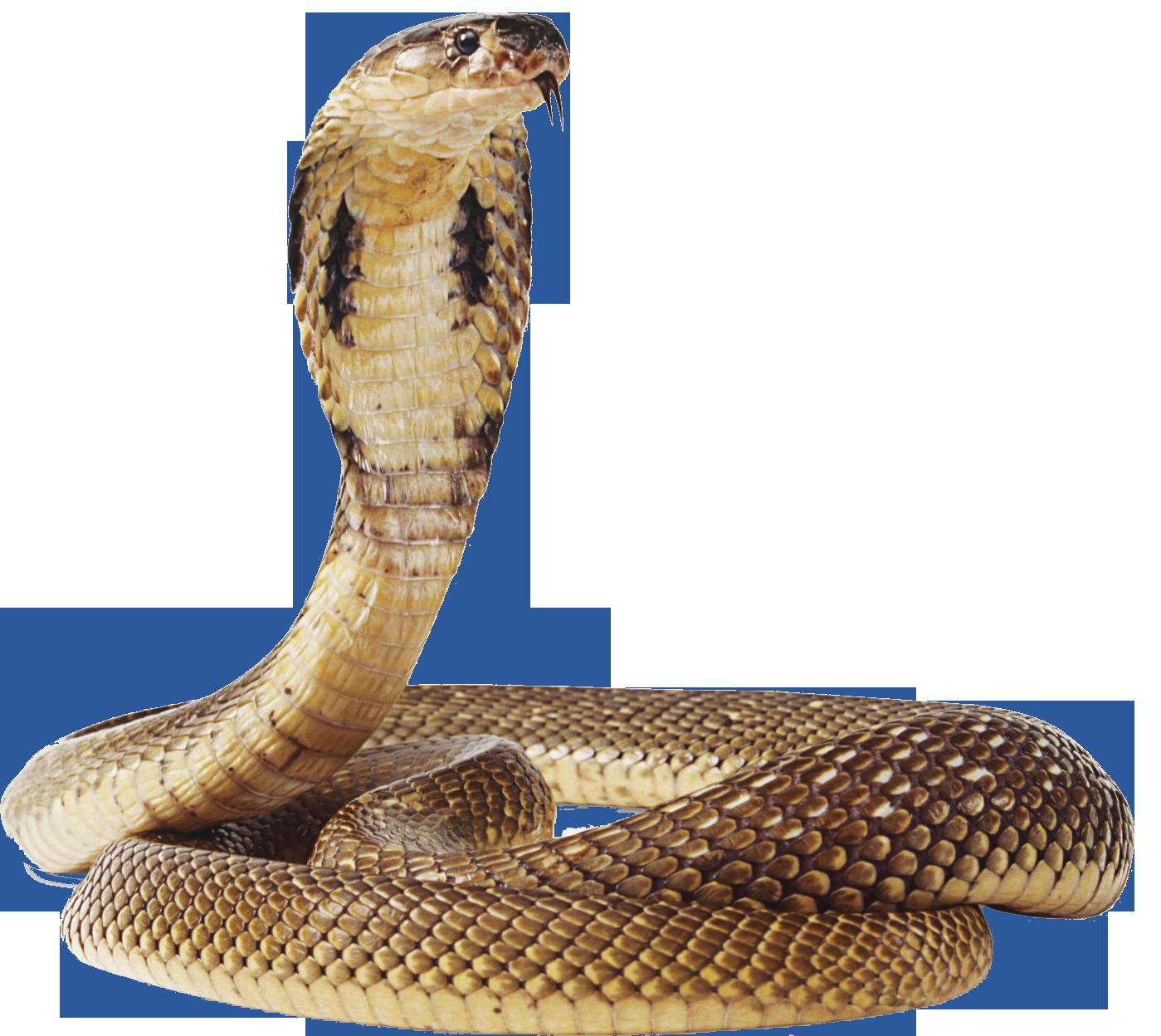Image - Cobra-snake-transparent-image.png