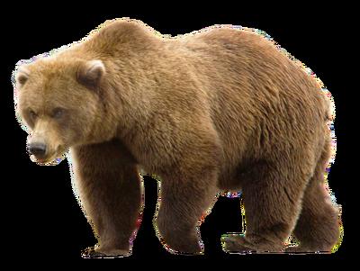 PNGPIX-COM-Bear-PNG-Transparent-Image-500x376
