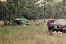 Summer Tour 94 10 national forest