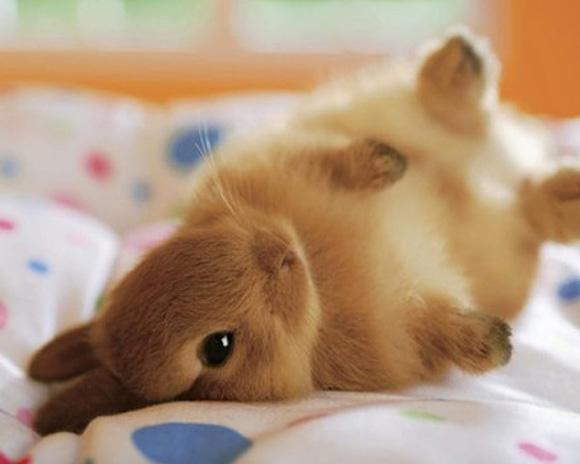 image bunny on side 1 jpg wii sports wiki fandom powered by wikia