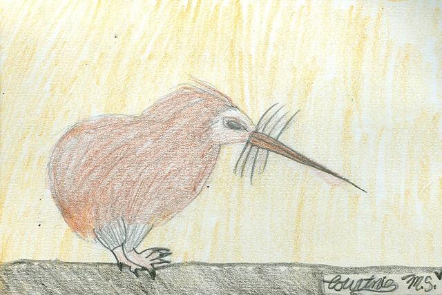 File:Courtnie Maroll-Slyvester The Brown Kiwi.jpg