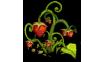 Strawberry (plant)