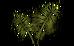Palm Rod (plant)