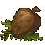 Magic Kwismas Tree Seed