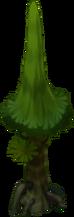 Baby Redwood