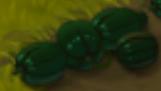 Watermelon (crop)