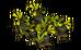 Black Cawwot Plant (plant)