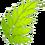 Fuzzy Fern Leaf
