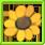 Ancestral Sunflower