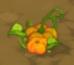 Pumpkin (crop)