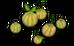 Melon (plant)