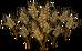 Rye (plant)
