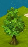 Shining Ash Tree