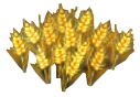 Crop Wheat