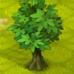 Baum Esche