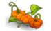 Pumpking (plant)