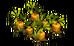 Cawwot Plant (plant)