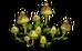 Mottled Mushroom (plant)