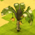 Banananasfruchtbaum