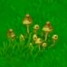 Funkus (plant)