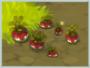 Tuberbulb (crop)