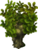 Tadbole Tree