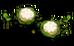 Jollyflower (plant)