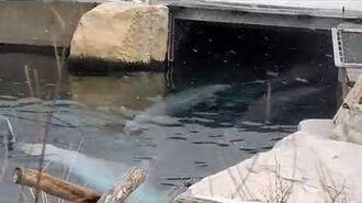 Delfinarium Nürnberg - Zoo-Mitarbeiter sagt die Unwahrheit - Delfine leiden!