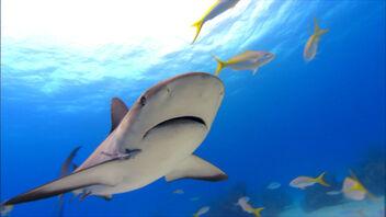 Fs sharkwater 03
