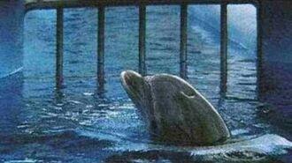 Wale & Delfine in Gefangenschaft