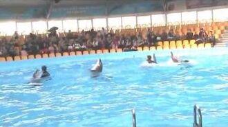 Wildgefangene Delfine aus Taiji Japan im Delfinarium in Kiew zu Clowns degradiert