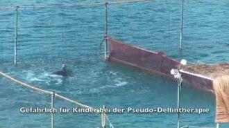 Delfintherapie Gefährliche Delfine in der Türkei