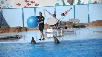 Delfin Show in Hurghada Delfinarium