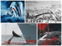 http://de.wal-delfin-und-hai.wikia