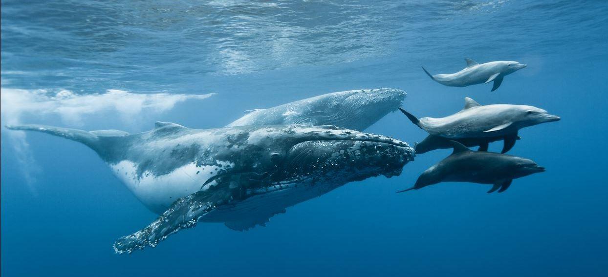 was ist ein wal wal delfin und hai wiki fandom powered by wikia. Black Bedroom Furniture Sets. Home Design Ideas