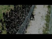Maggie vs. Walkers