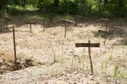 AMC 604 Graves
