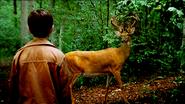Carl&deer