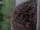 Charlyne (TV Series)