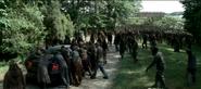 The TV Herd