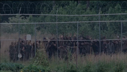 S4T Walker Fences