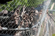 WalkersOnTheFence