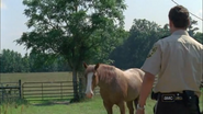 Horse and rick1