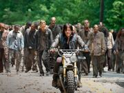 Daryl and the Herd