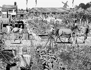 Community of Alexandria