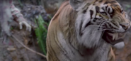 Shiva-walking-dead-tiger-season-8